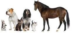 dogs_cats_horse