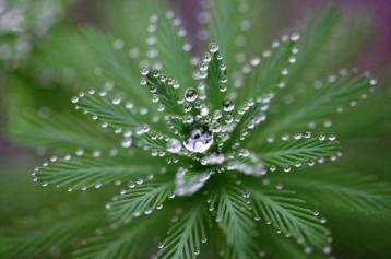 waterdrop